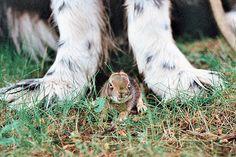 baby bunny, newfoundland, newf, newfie
