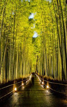Arashiyama Bamboo Forest, Kyoto (京都市), Japan (日本)
