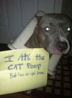 #pitbull #dogparkpublishing