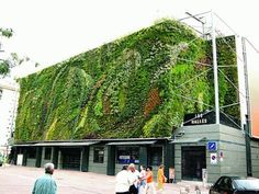 Patrick Blanc, Mur vegetal, 1988. Il muro vegetale si appoggia su un struttura metallica e su un pannello PVC.  Stazione Les Halles, Avignon, France.