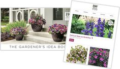 Proven Winners - Container Garden Design - Planting in Container Gardening How to Plant and Annuals Yellow Plants, Red Plants, White Plants, Pink Plant, Large Plants, Types Of Plants, Potted Plants, Hydrangea Macrophylla, Pieris Japonica
