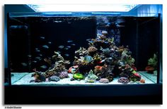 Saltwater Reef Aquariums | This is a stunning reef tank that truly tells a story of the world ...