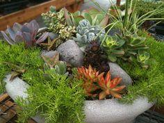 Garden Trends: How to Grow Sedums!