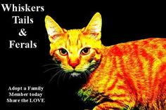 Whiskers, Tails and Ferals offers rescued cat, kitten, puppy and dog adoptions, as well as community cat / feral cat colony care and TNR (Trap, neuter, release) in Northern California's Napa County and surrounding areas. We are a non-profit, all volunteer organization. http://www.whiskerstailsandferals.org/ Visit our FB page for a lot more: https://www.facebook.com/pages/Whiskers-Tails-and-Ferals/165066516402 #northbay #napa #pet #adoptions #cat #kitten #puppy #dog #nonprofit #rescue