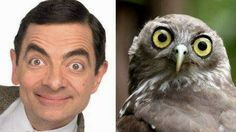 Funny Animals Famous Look Alikes