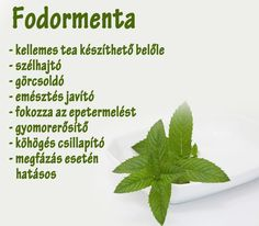 Fodormenta | Socialhealth Jaba, Doterra, Eating Well, Tea Time, Healthy Life, Health Care, Nutrition, Herbs, Drinks