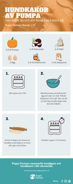 Enkelt recept på pumpakakor till dig och din hund! Infographics, Information Graphics, Infographic, Infographic Illustrations, Info Graphics