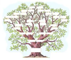 L'arbre généalogique : exercice - Momes.net Family Tree Wall Decor, Make A Family Tree, Family Trees, Palm Tree Drawing, Family History Book, Forest Tattoos, Celtic Tree Of Life, Montage Photo, Christmas Canvas