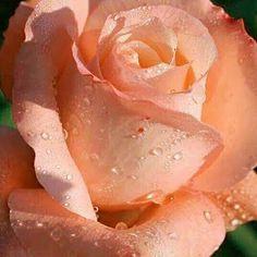 Hermoso color!!!! - Antonio Garcla H - Google+