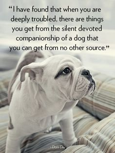 """""""I have found that when you are deeply troubled, there are things you get from the silent devoted companionship of a dog that you can get from no other source"""". #DorisDay #rescue #dogquotes"""