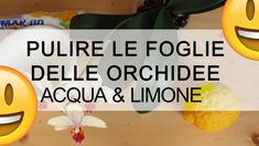 ORCHIDEA come pulire le foglie con ACQUA E LIMONE Plant Care, House Plants, The Cure, Flora, Gardening, Terrazzo, Youtube, Game, Green