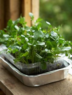 Learn how to grow a watercress container garden from seeds with these gardening tips from HGTV.com