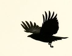 Static Flight by Patrick Wilken Quoth The Raven, Raven Bird, Crow Art, Bird Art, Dark Wings, Crows Ravens, Spirit Animal, Bald Eagle, Animals And Pets