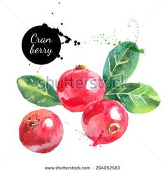 Hand drawn watercolor painting cranberry on white background. Vector illustration of berries	 - stock vector