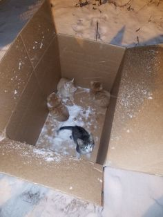 Kittens Found Abandoned in a Box-In the Middle of a Snowstorm! For animal people. Pass it on.