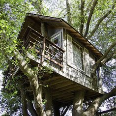 The tree cottage – Tree House Rentals