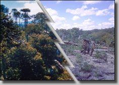 11 Best Deforestation before and after ! images ...