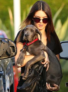 A new furry friend: Kendall Jenner stepped out with her new Great Dane puppy on Wednesday  Love I want one