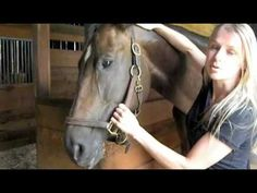 ▶ Horse Massage: Releasing Tension in the Poll - YouTube