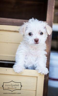 Mudpaint - 'butternut' - and cute puppy!