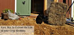 Easy Way to Extend the Life of your Chicken Coop Bedding