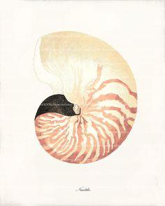 Antique Sea Shell Art Print 8x10 Nautilus Shell by 1001treasures