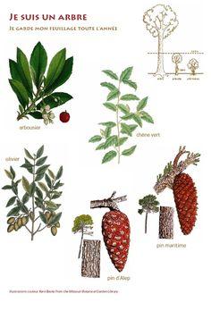 Un dossier présentant la flore, ses caractéristiques et les moyens de la reconnaître.