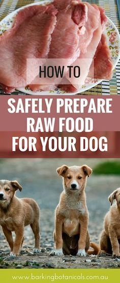 Homemade Dog Food - Raw food dangers for dogs has become a hot topic after Trust Me I'm A Vet recently aired. Here are tips on how to safely feed your dog a raw food diet. Make Dog Food, Homemade Dog Food, Pet Food, Raw Food For Dogs, Raw Feeding For Dogs, Puppy Food, Dog Nutrition, Dog Diet, Dog Training Tips