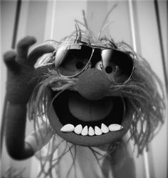 The Muppets have always had a special place in my heart. First on Sesame Street, then through their show, and through now through the movie. Im Losing My Mind, Lose My Mind, Losing Me, Jim Henson, Das Tier Muppets, Animal Muppet, Happy Weekend Quotes, Happy Sunday, Fraggle Rock