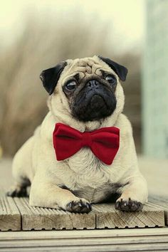 I'm going to get a pug dog and name it goblin. :)