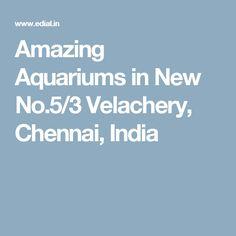 Amazing Aquariums in New No.5/3 Velachery, Chennai, India