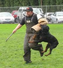#Schutzhund #training