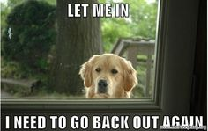 omg, Daisy does this all the time!! Or she just goes out to get a treat, but doesn't actually get off the porch!! *L*