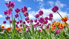 65 Best Spring And Summer Scenes Images Summer Scenes Free Photos