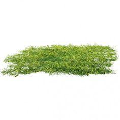 #grass #grass #ground