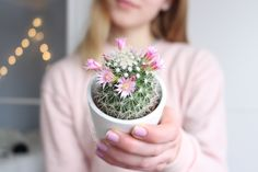 warning: there are going to be a TON of flower pics here so, prepare yourselves Plant Aesthetic, Spring Aesthetic, Tumblr Quality, Plants Are Friends, Cactus Y Suculentas, Tumblr Photography, Tumblr Wallpaper, Cacti And Succulents, Decoration