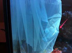 Wer kennt das nicht? Die endlosen Diskussionen unter Aquarianern, wie man seinen neu erworbenen Zierfischam besten an sein eigenes Aquarienwasser gewöhnt. Gemeint ist dabei das umsetzen des erworbenen Tieres vom Plastikbeutel in das heimische Aquarium.   #gewöhnen #umsetzten #Zierfischkauf