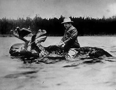Theodore Roosevelt, riding a moose, 1900.
