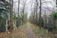 unique things to do in Budapest is to visit the nearly abandoned Jewish Cemetery