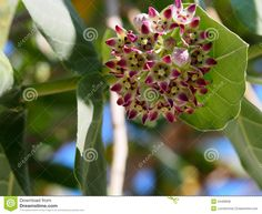 plants native to cuba - Google Search