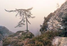 https://flic.kr/p/DVPx62 | Nebelkiefer | Warme Sonnenstrahlen lassen den Nebel im morgendlichen Elbsandsteingebirge golden leuchten. Gestern hatte ich mal einen freien Tage und konnte somit ohne jede Eile in der Wochen fotografieren gehen. Die ganze Woche hatte ich darauf gehofft und ich wurde