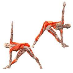 Revolved triangle pose, left arm behind right foot - Parivritta Trikonasana left - Yoga Poses