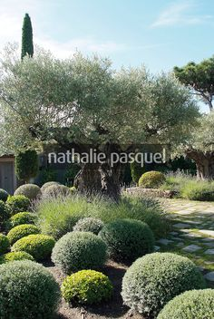 1000 images about hebe on pinterest evergreen shrubs for Decor paysagiste jardin