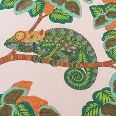 """#ShareIG Chameleon on tree 