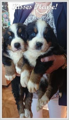 dog learning,dog tips,dog care,teach your dog,dog training Cute Little Puppies, Cute Puppies, Cute Dogs, Puppy Care, Dog Care, Low Maintenance Dog Breeds, Dog Ear Cleaner, Funny Animals, Cute Animals
