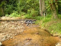 50 acres farm for sale in Belize on the Hummingbird Hwy