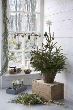 juletre fra skogen lite enkelt naturlig