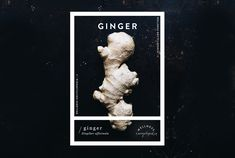 Wellness Encyclopedia: Ginger | Free People Blog #freepeople