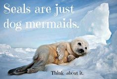 animal planet mermaids | Seals are Just Dog Mermaids - Animal Planet: Animal Oddities