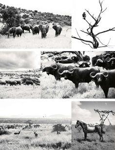 Safari... African Safari, Trips, Moose Art, Future, Summer, Travel, Animals, Bon Voyage, Viajes